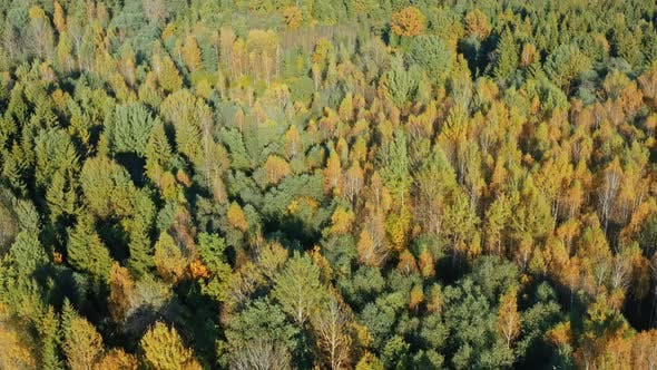 Thumbnail for Autumn in Forest Aerial Top View. Fall Colors of Mixed Countryside Woodland, Green Conifers, Yellow