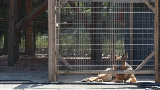 Thumbnail for Guard Dog Inside the Gate