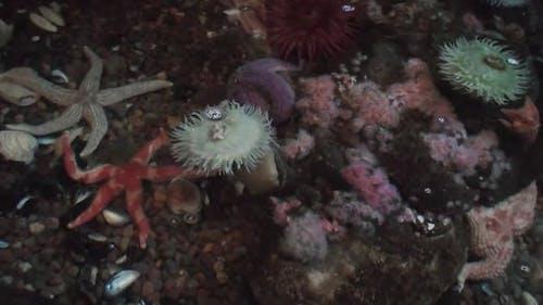 Starfish Marine Starfish Urchin Life