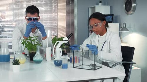 Black Female Scientist Dropping Fertilizer on Leaf and Giving To the Hamster in Chemistry Lab