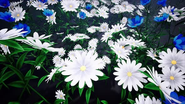Thumbnail for Flower Field Loop #05 4k