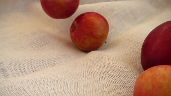 Thumbnail for Fall Apples