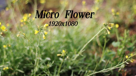 Cover Image for Micro Flower