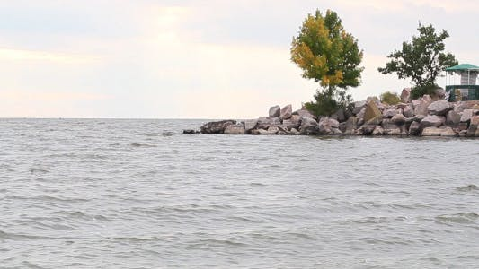 Cover Image for Tree By The River