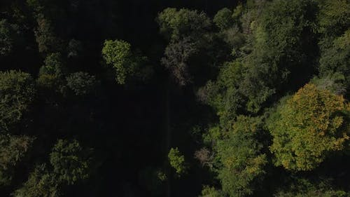 A Short Pan Up over a Forest