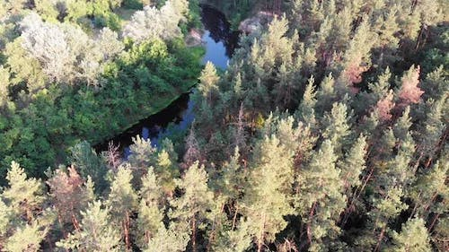 Aerial View of Riverbed Between Pine Forest, River Near Tops of Green Trees