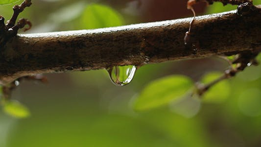 Thumbnail for Rain Drop Dripping 3
