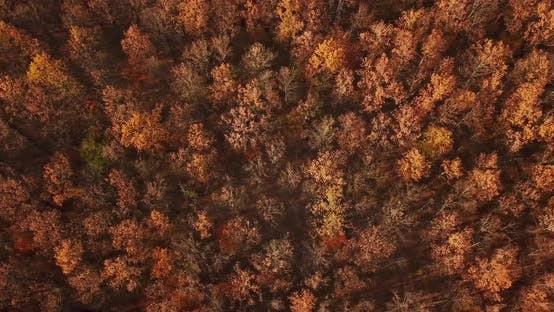 Thumbnail for Aerial Top View of Autumn Trees in Forest Background