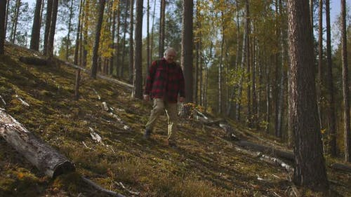 Lonely Middle-aged Man Is Walking in Autumn Forest, Tourism and Hiking Are Useful for Health