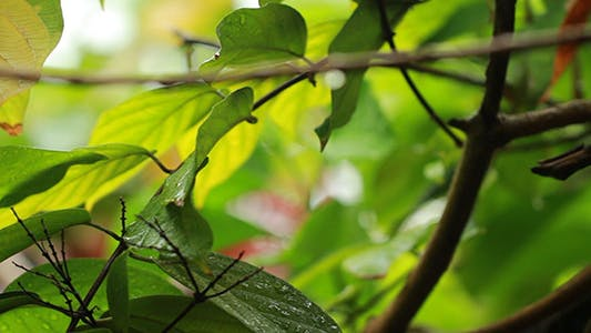 Thumbnail for Rain On Leaves - Focus Changing 3