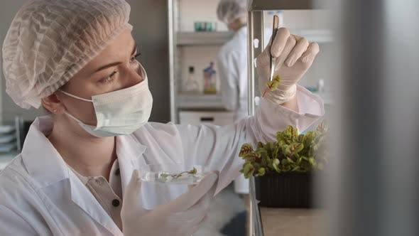 Thumbnail for Female Biologist Taking Sample of Plant in Lab