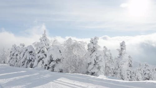 A Crosscountry Skier Skies Down a Trail in a Snowcovered Winter Landscape with Trees on Sunny Day