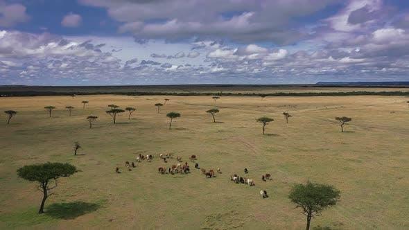 Wild Animals in South Africa