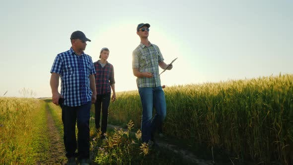 Thumbnail for A Group of Young Farmers Walking Along the Wheat Fields, Talking