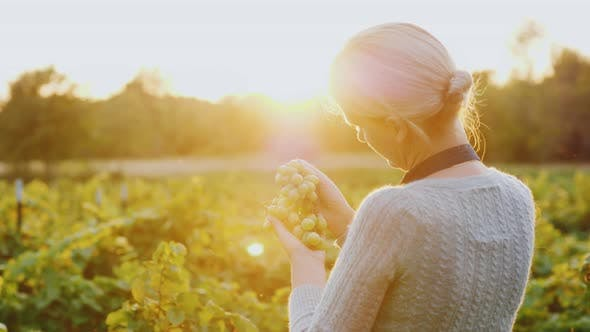 Thumbnail for A Woman Farmer Stands in a Vineyard Holding a Bunch of Grapes