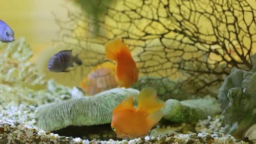 Tropical Fish Aquarium. Close up