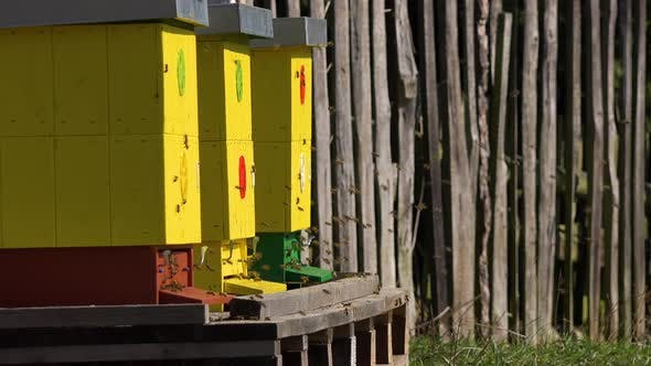 Thumbnail for Three Yellow Bee Hives Outside on a Sunny Day, Bees Fly in and Out.