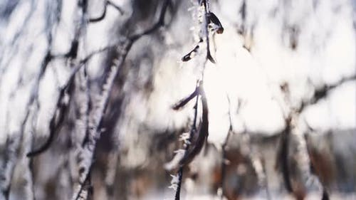 Shallow Depth of Field. Focus on Front Branch