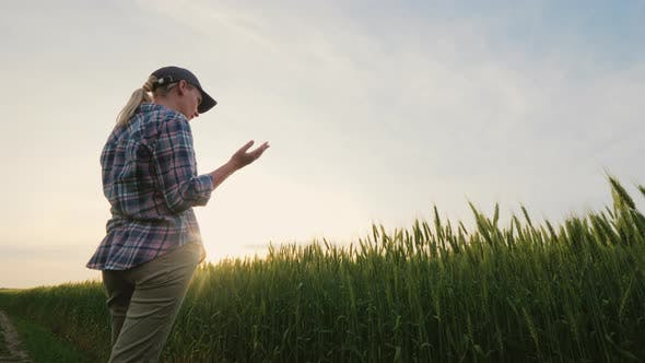 Cover Image for Woman Farmer Talking on the Phone, Standing in a Picturesque Place Near a Wheat Field