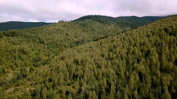 Aerial of Flying Over a Beautiful Green Forest in a Mountains Landscape,
