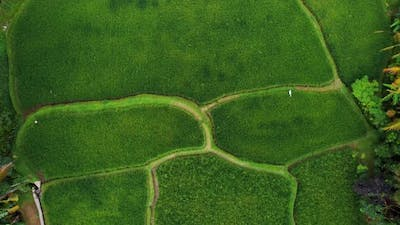 Top Down View on Rice Terrace in Bali Indonesia