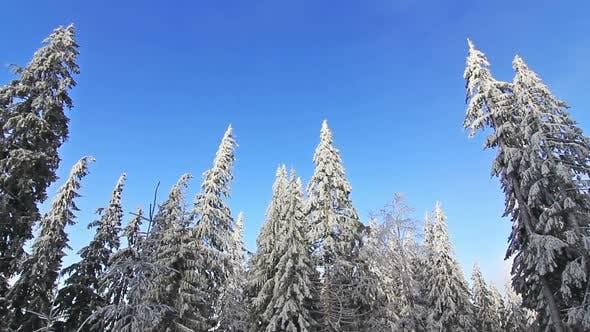 Зимние деревья под снегом