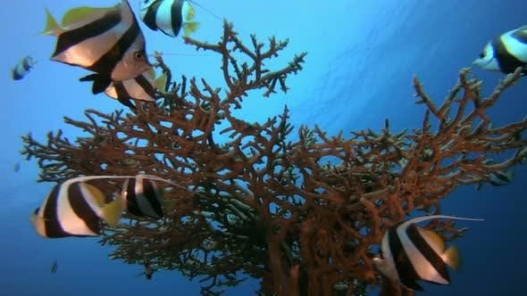 Thumbnail for Schooling Underwater Fish Scene