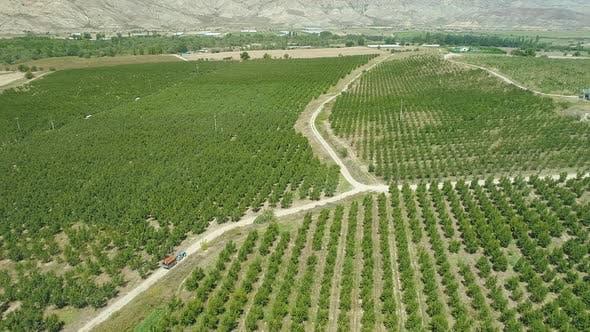 Thumbnail for Aerial view of peach farm