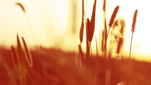 Thumbnail for Sunset And Grass