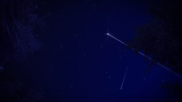 Thumbnail for Starry Sky In The Forest