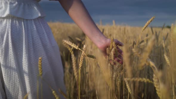 Cover Image for Young Girl Walking Through a Wheat Field