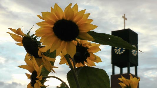 Thumbnail for Sunflower and the Church