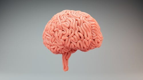 Brains Surface Growth