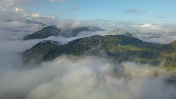 Thumbnail for Aerial Panoramic Foggy Forest