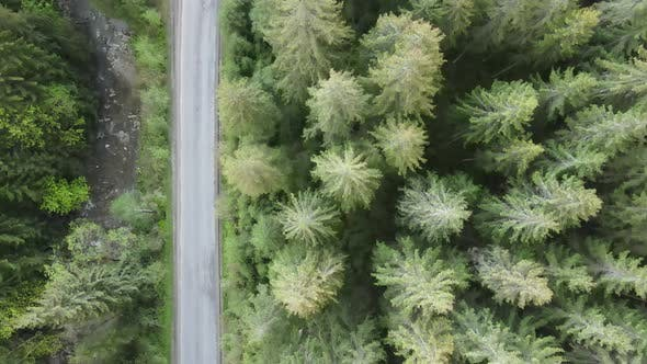 The Road in the Mountains. Slow Motion. Carpathians. Ukraine. Aerial. Gray, Flat