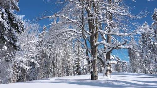 Flying in Fabulous Winter Forest