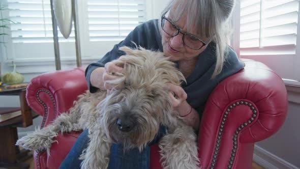 Thumbnail for Senior dog getting pets