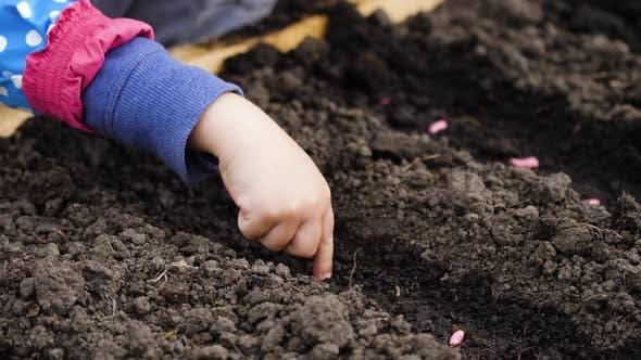 Thumbnail for Girl and grandma planting seeds