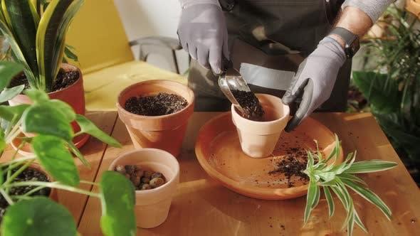 Mann pflanzt Hängekorb mit Blumen für Sommergarten Floristen in Werkstatt Kleinunternehmen