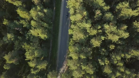 Thumbnail for Forest Road From Above