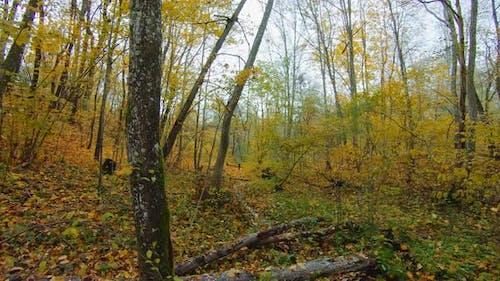 Autumn forest, brook, filmed from steadicam