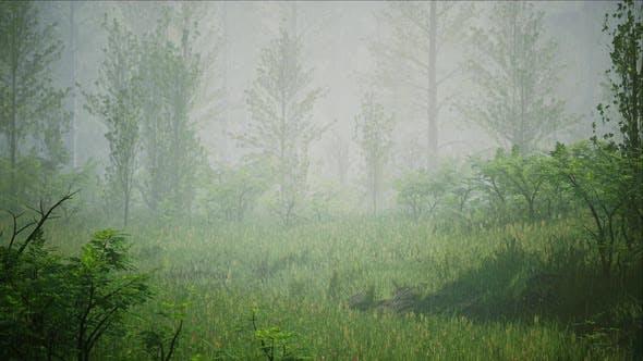 Rainy Foggy Forest