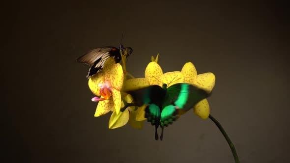 Thumbnail for Butterflies on a Flower