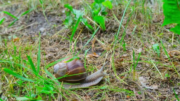 The snail crawls on the ground