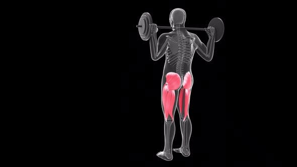 Back View Of  Alternate Front Lunges With Barbell