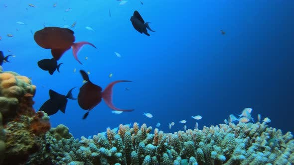 Thumbnail for Underwater Marine Tropical Life