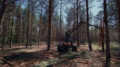 A log loader in the middle of the forest loads freshly cut logs.