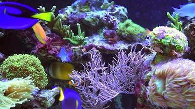 Colorful Marine Aquarium