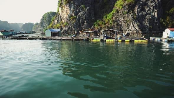 Floating Fishing Village In The Ha Long Bay. Cat Ba Island, Vietnam