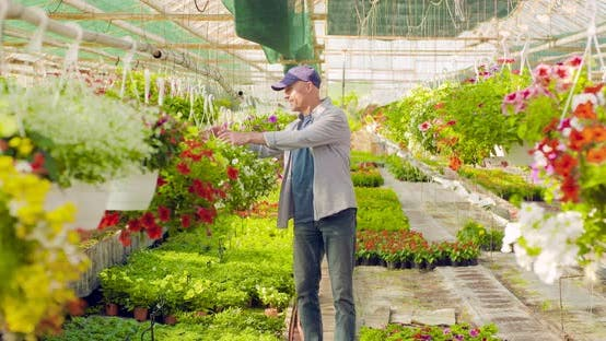 Confident Male Gardener Examining Potted Flower Plant